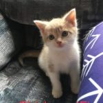 Image of Chickpea (reserved)