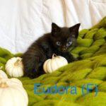 Image of Eudora