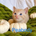 Image of Peabody
