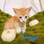 Image of Pogo